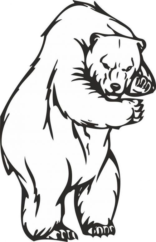 BEAR-010
