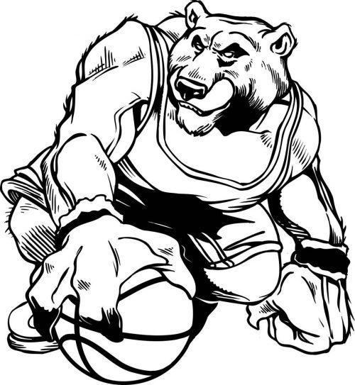 BEAR-036