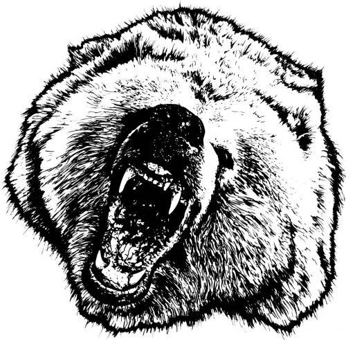 BEAR-049