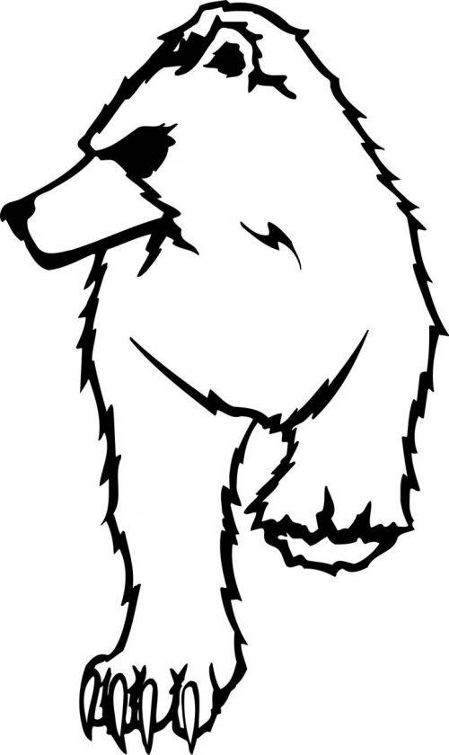 BEAR-050