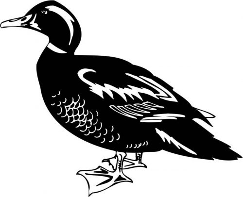 BIRD-003