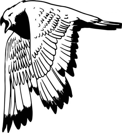 BIRD-007