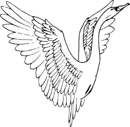 BIRD-008