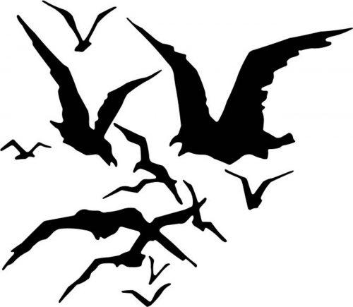 BIRD-013