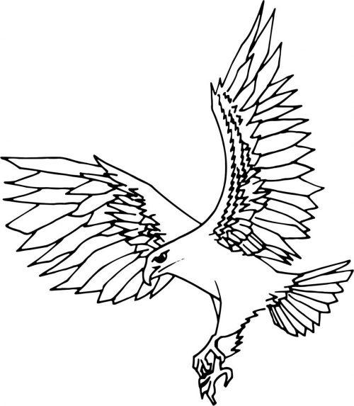 BIRD-015