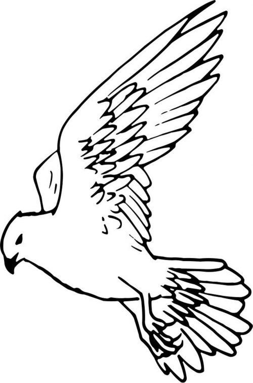 BIRD-016