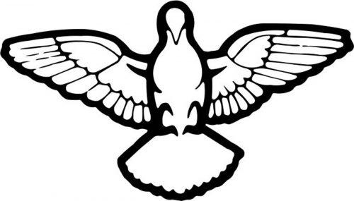 BIRD-017