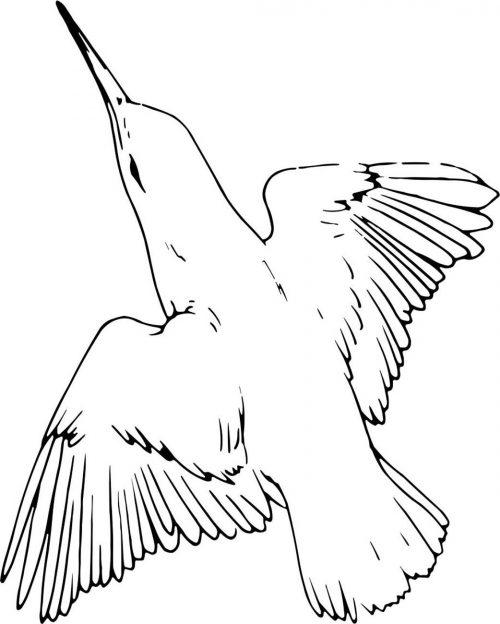 BIRD-018