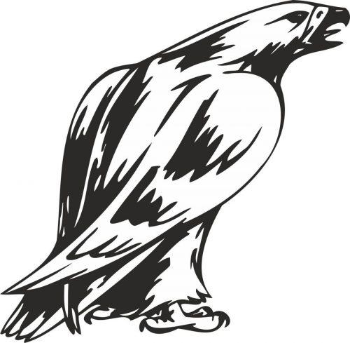 BIRD-PREDATOR-134