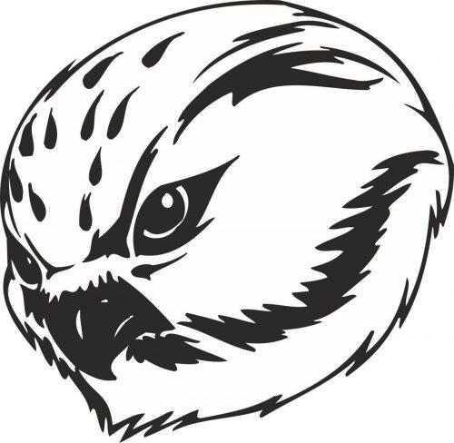 BIRD-PREDATOR-138