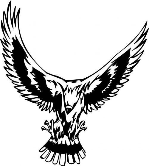 BIRD-PREDATOR-141