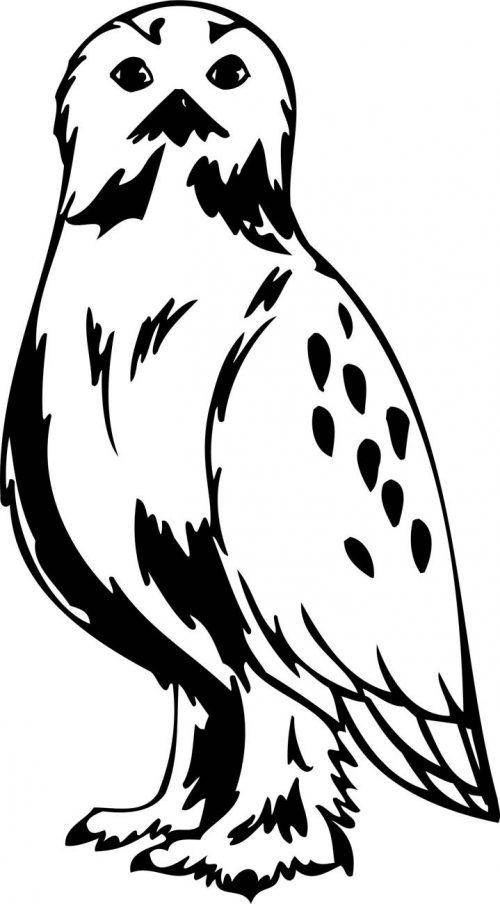 BIRD-PREDATOR-142