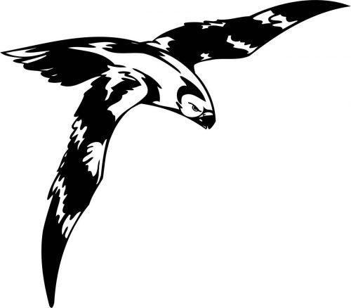 BIRD-PREDATOR-143