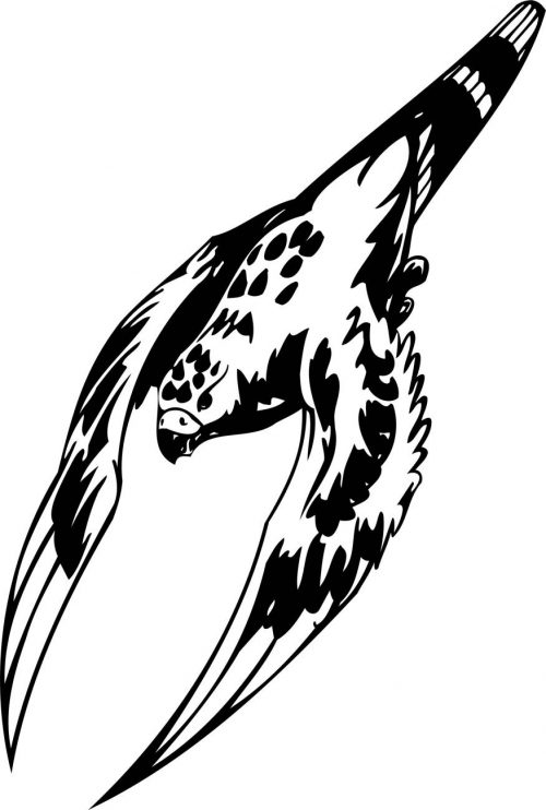 BIRD-PREDATOR-144