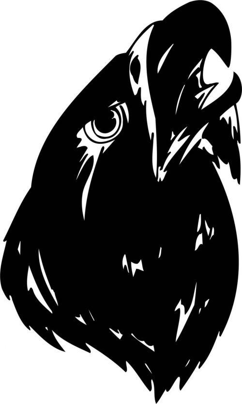 BIRD-PREDATOR-145