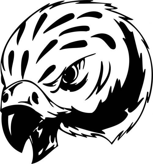 BIRD-PREDATOR-146