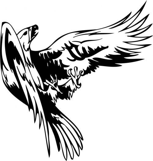 BIRD-PREDATOR-147