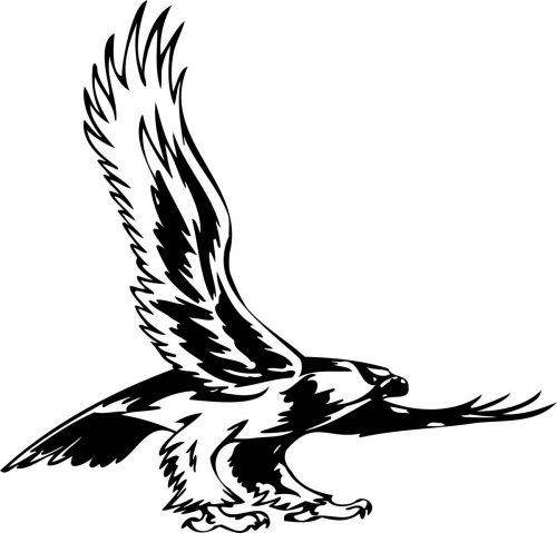 BIRD-PREDATOR-149