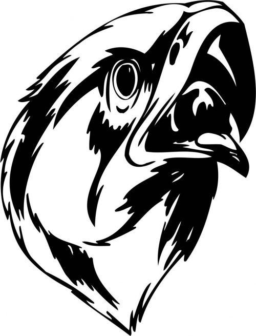 BIRD-PREDATOR-151
