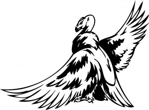 BIRD-PREDATOR-152
