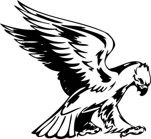 BIRD-PREDATOR-153