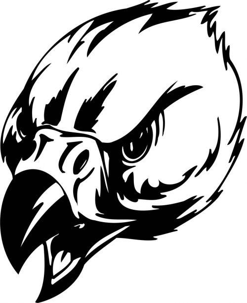 BIRD-PREDATOR-154