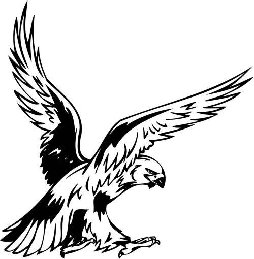 BIRD-PREDATOR-156