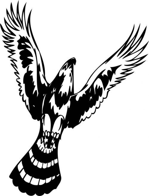 BIRD-PREDATOR-159