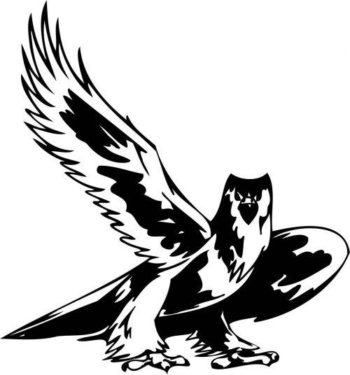 BIRD-PREDATOR-161