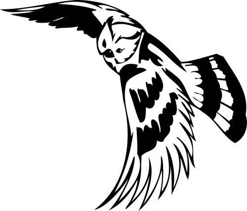 BIRD-PREDATOR-162