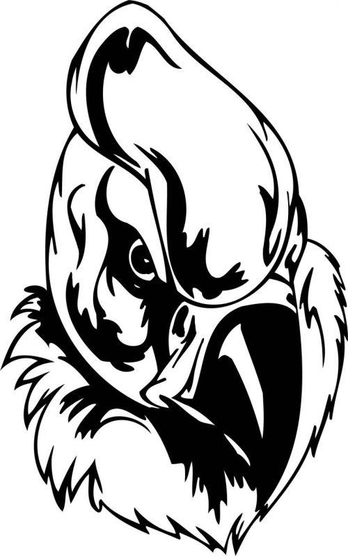 BIRD-PREDATOR-163