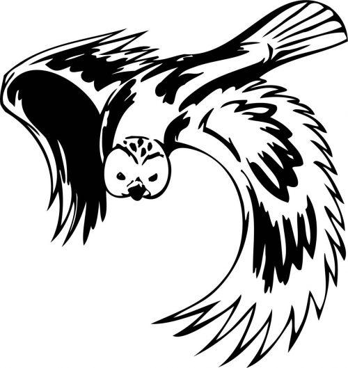 BIRD-PREDATOR-166