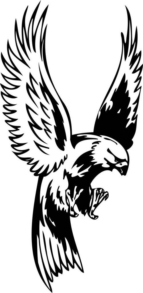BIRD-PREDATOR-167