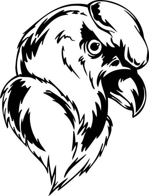 BIRD-PREDATOR-168