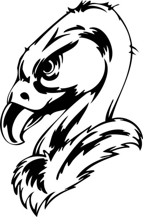BIRD-PREDATOR-170