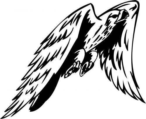 BIRD-PREDATOR-171