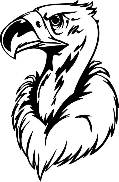 BIRD-PREDATOR-172
