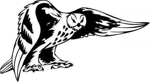 BIRD-PREDATOR-175