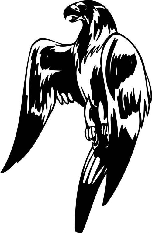 BIRD-PREDATOR-177