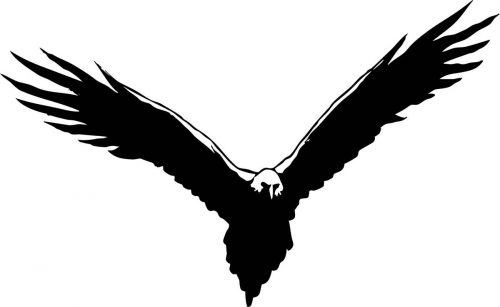 BIRD-021