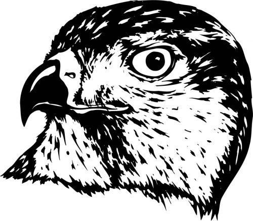 BIRD-030