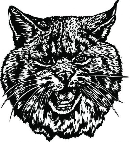 BIG-CAT-115