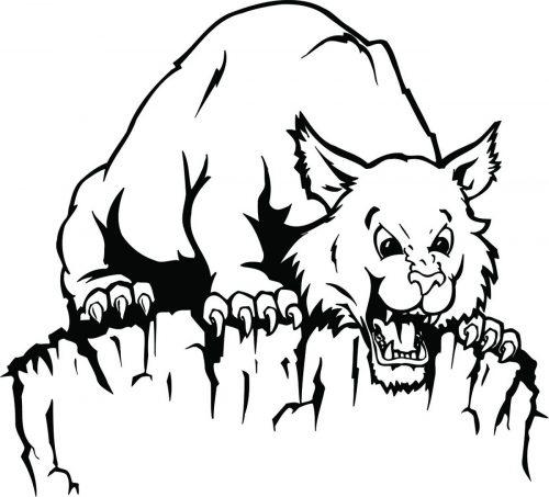 BIG-CAT-125