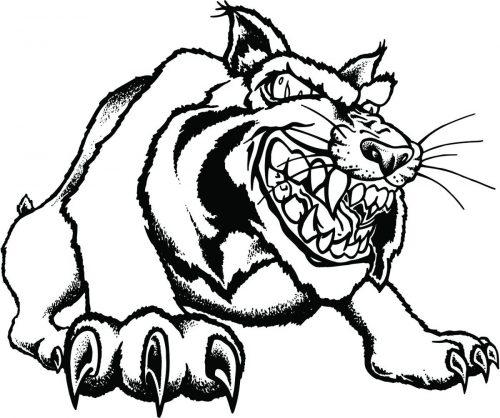BIG-CAT-131