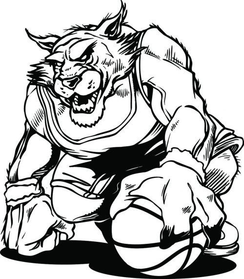 BIG-CAT-151