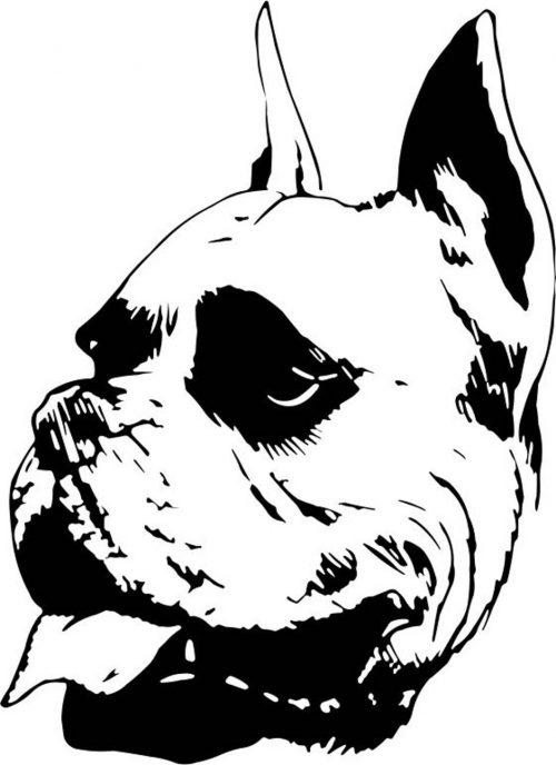 DOG-001