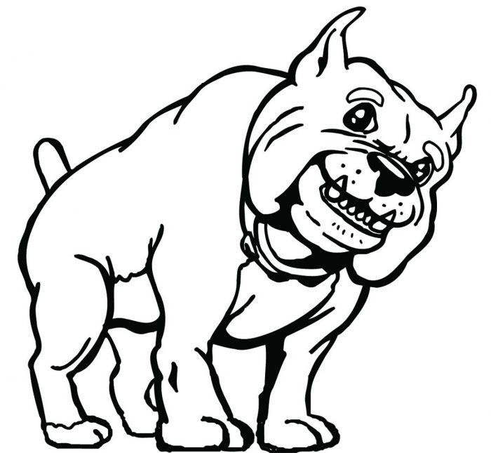 DOG-035