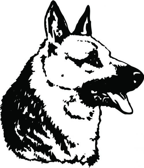 DOG-158