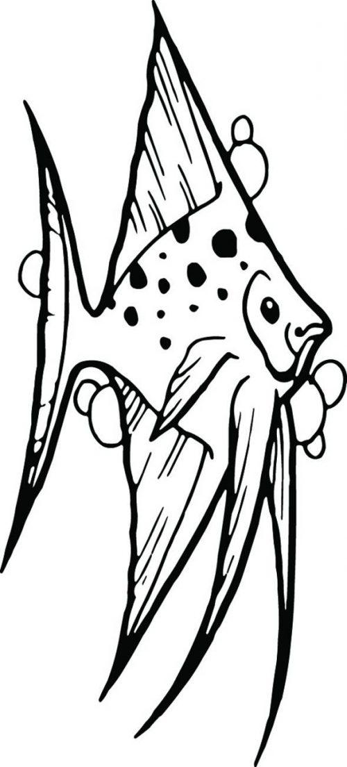 FISH-094