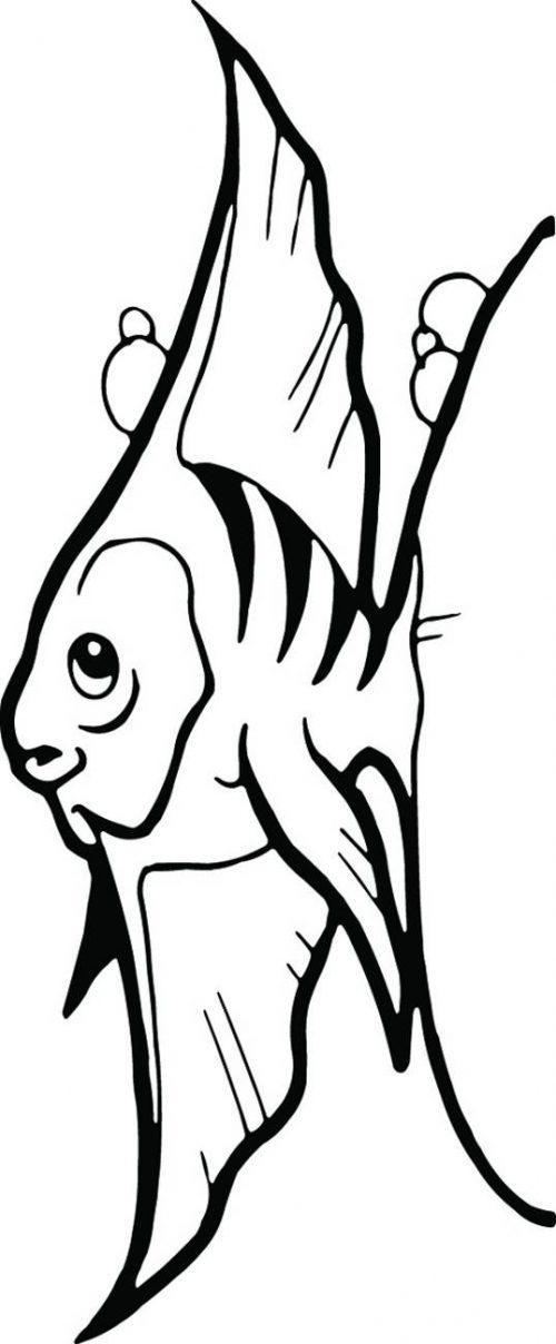 FISH-100